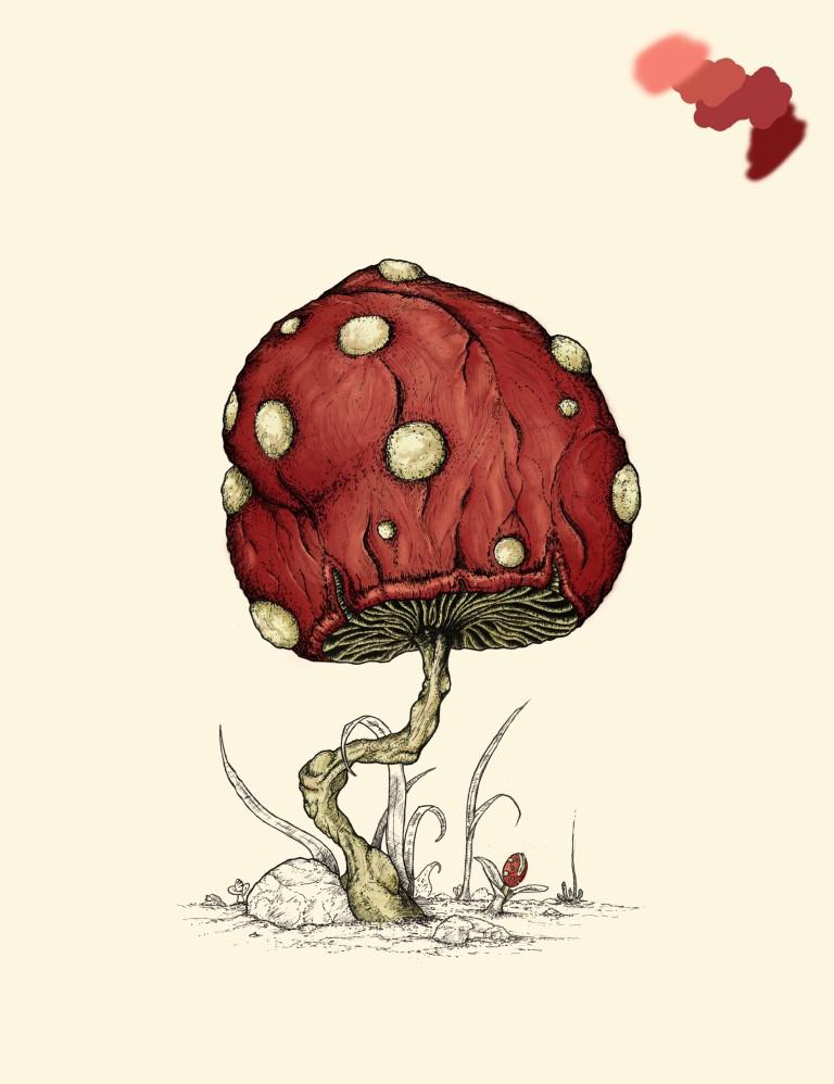 Grow Mushroom Color Process 1