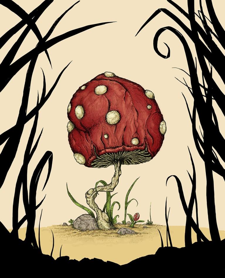 Grow Mushroom Color Process 3